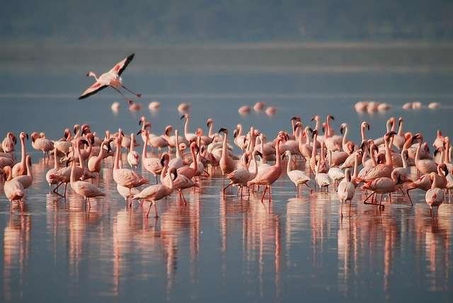 flamingos-1099071 640